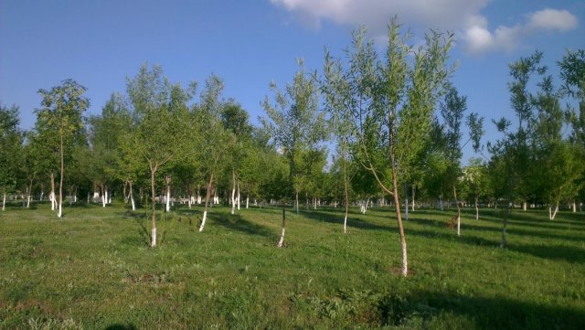 Городской парк Арай, Астана