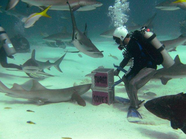 Кормление акул на Багамах