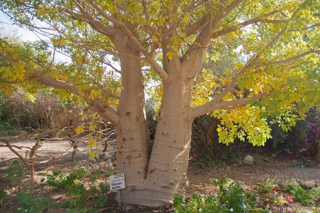 Ботанический сад, Эйлат