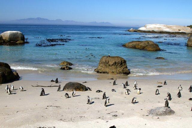 Пляж Болдерс, Кейптаун