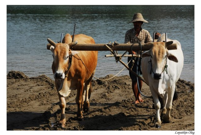 Фото во время плавания на лодке по реке Ayeyarwaddy