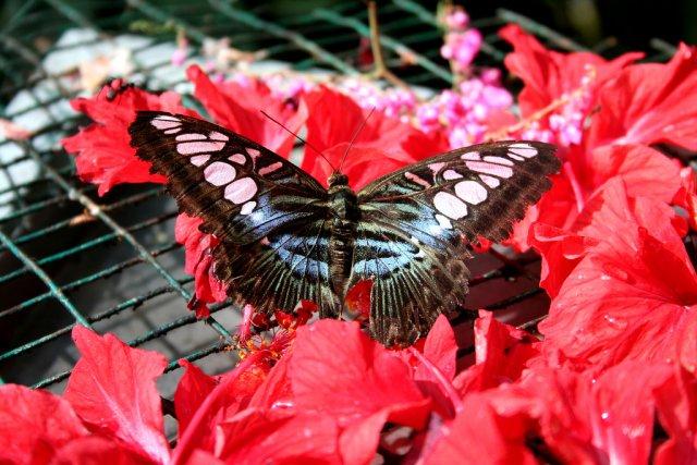 Парк бабочек, Пхукет