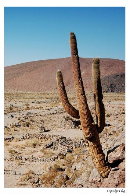 Пример местной растительности (высота около 3х метров)