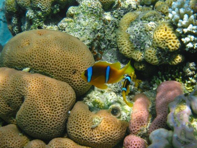 Природный заповедник «Коралловый пляж», Эйлат