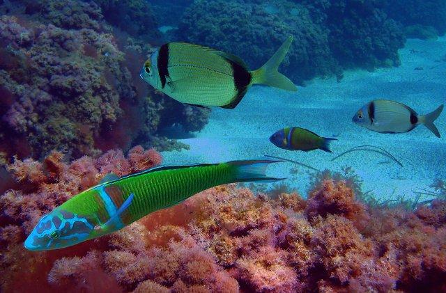Критский морской аквариум