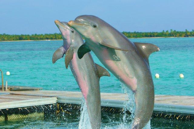 Остров дельфинов, Пунта-Кана
