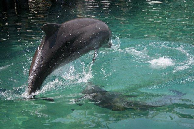 Дельфиний риф, Эйлат