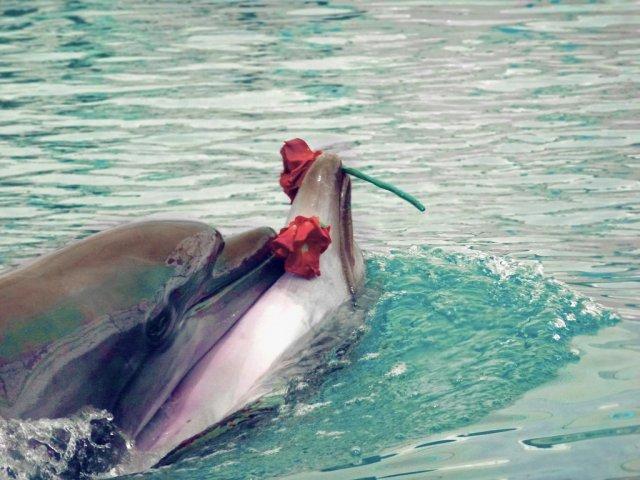 Дельфинарий Кемера