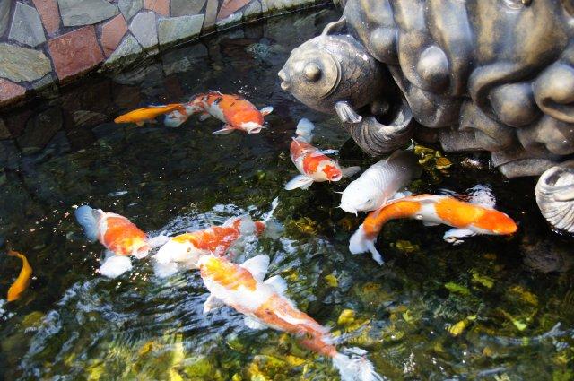 Откормленные рыбы