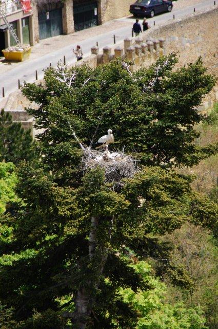 Аисты в своих гнездах на деревьях, Сеговия