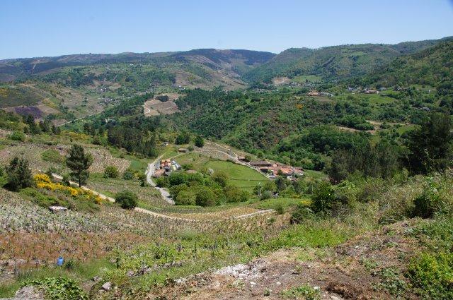 Виноградники региона Рибейра Сакра, Испания