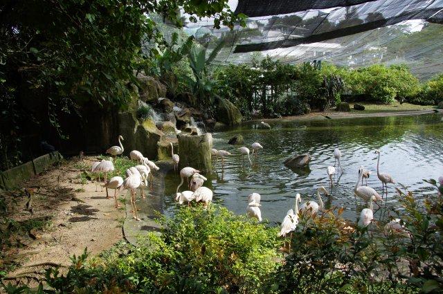 Парк Птиц в Куала-Лумпуре, Малайзия