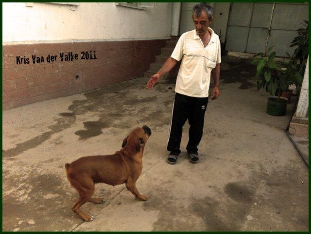 У Ибрагима – породистый, но старый пёс…