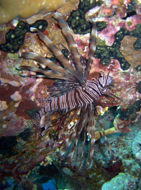 Подводный мир курорта Эль-Кусейр, Египет
