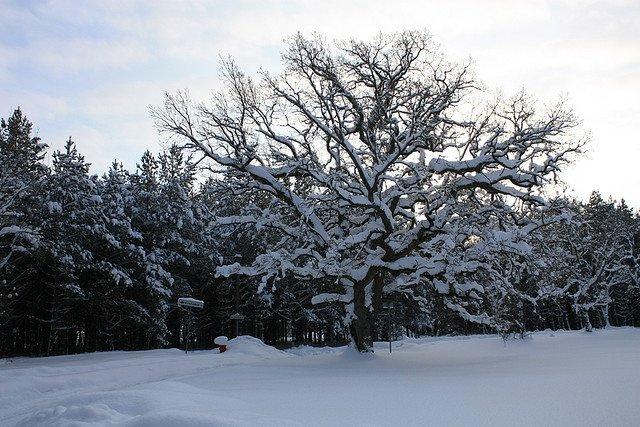 Зимний лес, Эстония