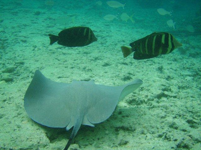 Подводный мир островов Французской Полинезии