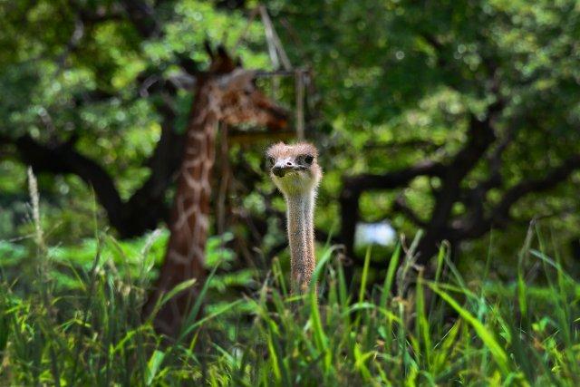 Зоопарк Гонолулу