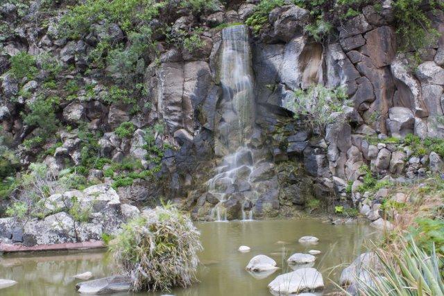 Ботанический сад Канарии