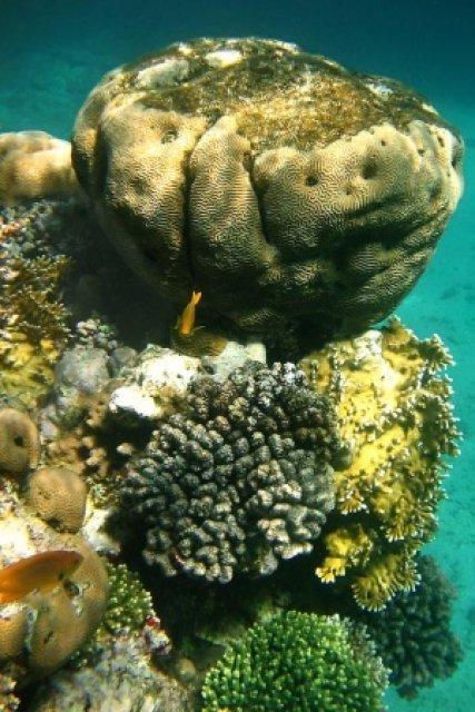 Склон рифа Красного моря, Шарм-эль-Шейх, Египет