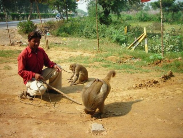 Поклон мне и Вам от предков наших, Индия