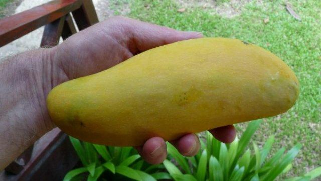 По дороге на Реданг манго были совсем дешевые