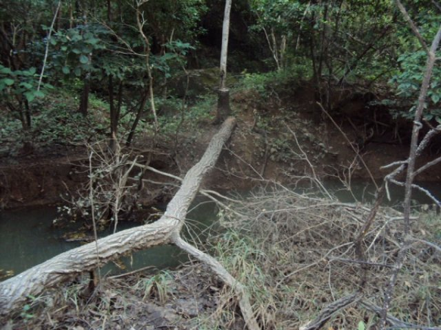 Мостик в лесу, Венесуэла
