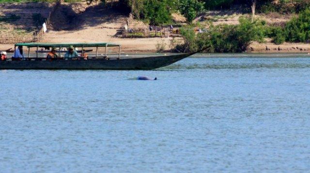 Пресноводных дельфинов трудно снимать
