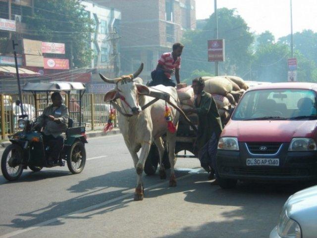 На проезжей части дороги Дели, Индия