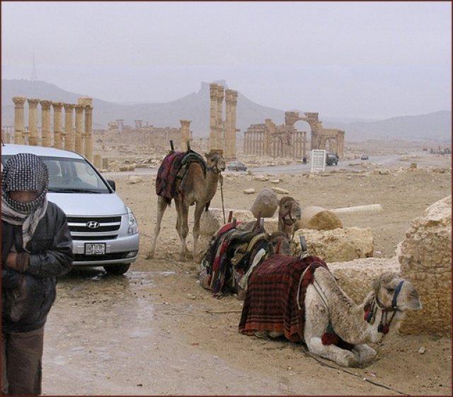 Пальмира.31 декабря. Дождь в пустыне - редкость. Это - к счастью
