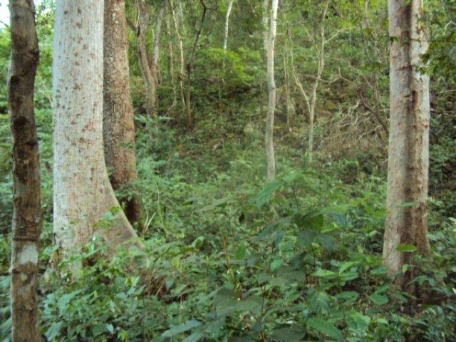 Венесуэльский лес
