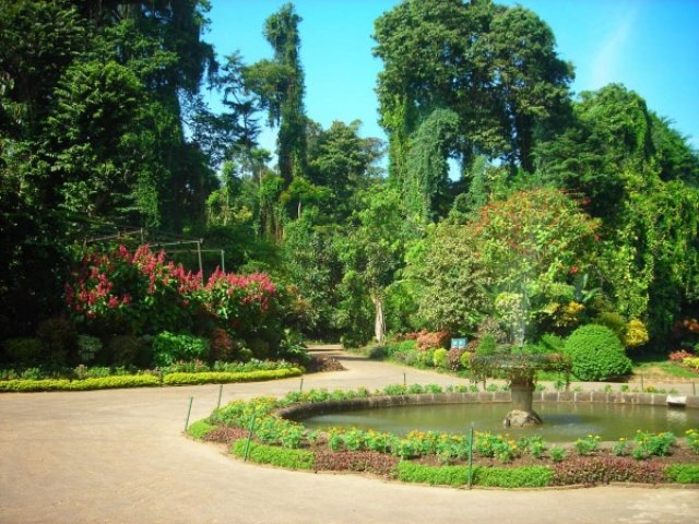 Красотища ботанического сада Канди, Шри-Ланка
