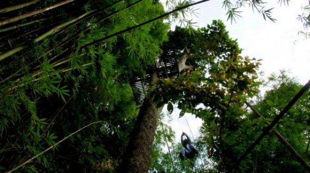 Наш домик на дереве