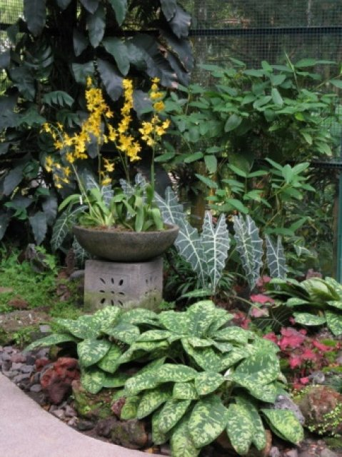 Клумба в ботаничечком саду Сингапура