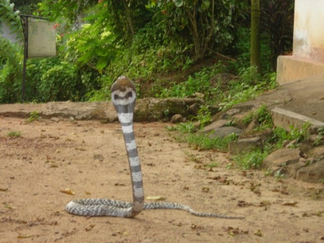 Змеиная ферма, Шри-Ланка