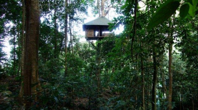 Наш домик в джунглях