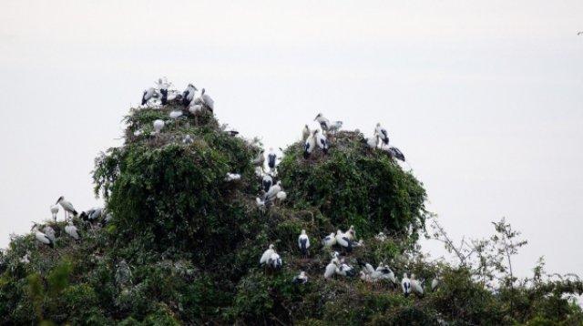 Птичий заповедник