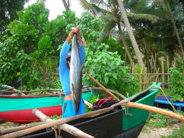 Удачный улов, Мерисса, Шри-Ланка