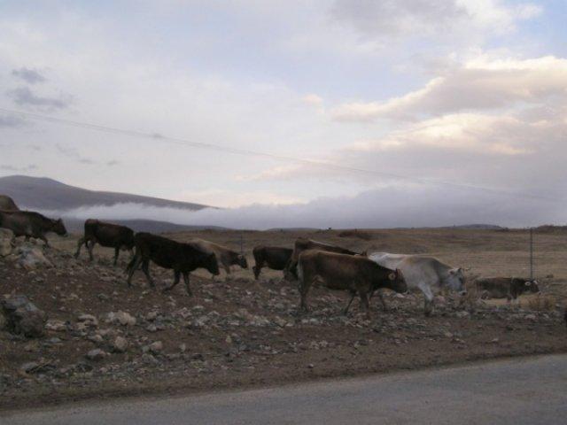 Вид по дороге на Карабах