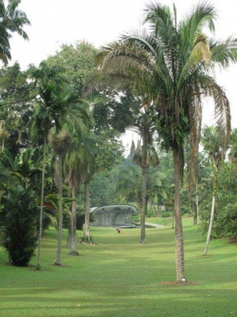 Пальмы и музыкальная веранда
