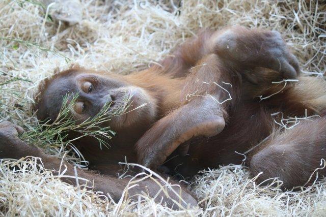 Мельбурнский зоопарк