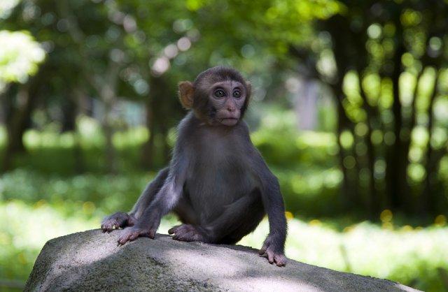 Остров обезьян, Хайнань