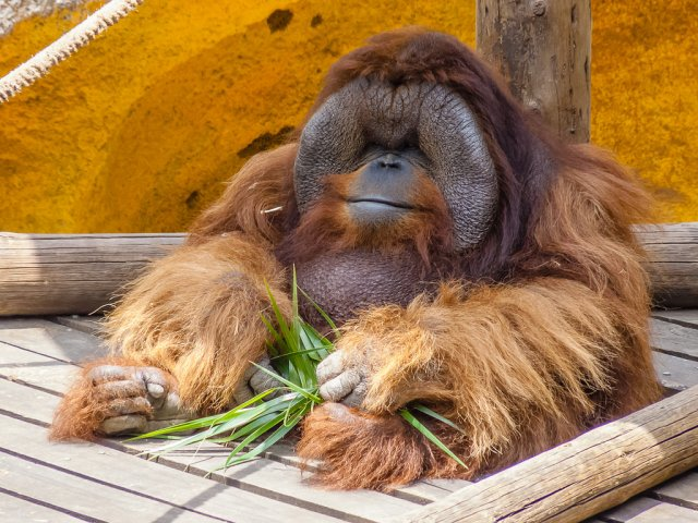 Парк обезьян, Тенерифе