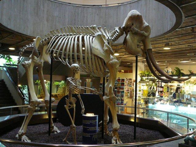 Музей естественной истории, Женева