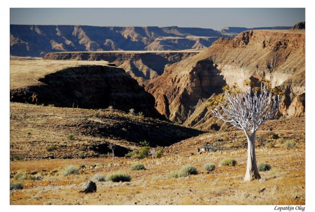 Quiver tree и вид на Fish river canyon