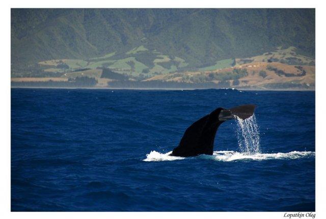 Ныряющий кит