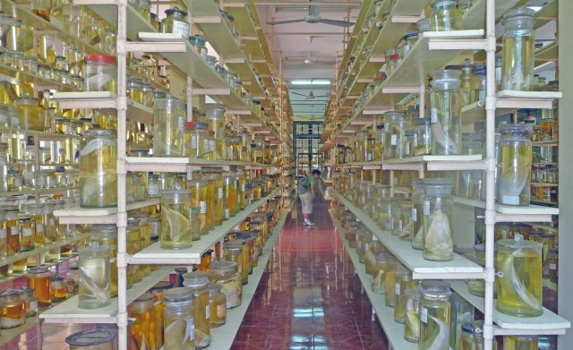 Океанографический институт, Нячанг