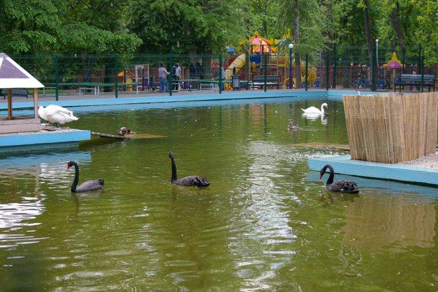 Парк имени Октябрьской революции, Ростов-на-Дону