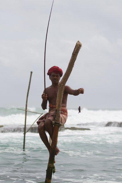 Традиционная рыбалка на сваях, Шри-Ланка