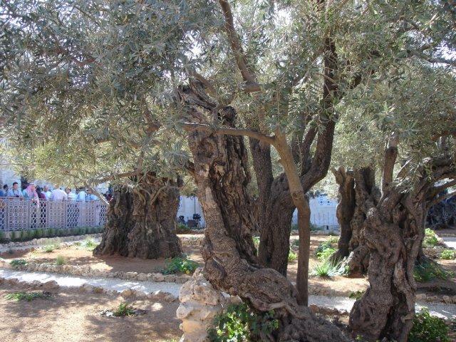 Гефсиманский сад, Иерусалим