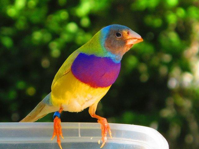 Парк птиц «Мир пернатых»